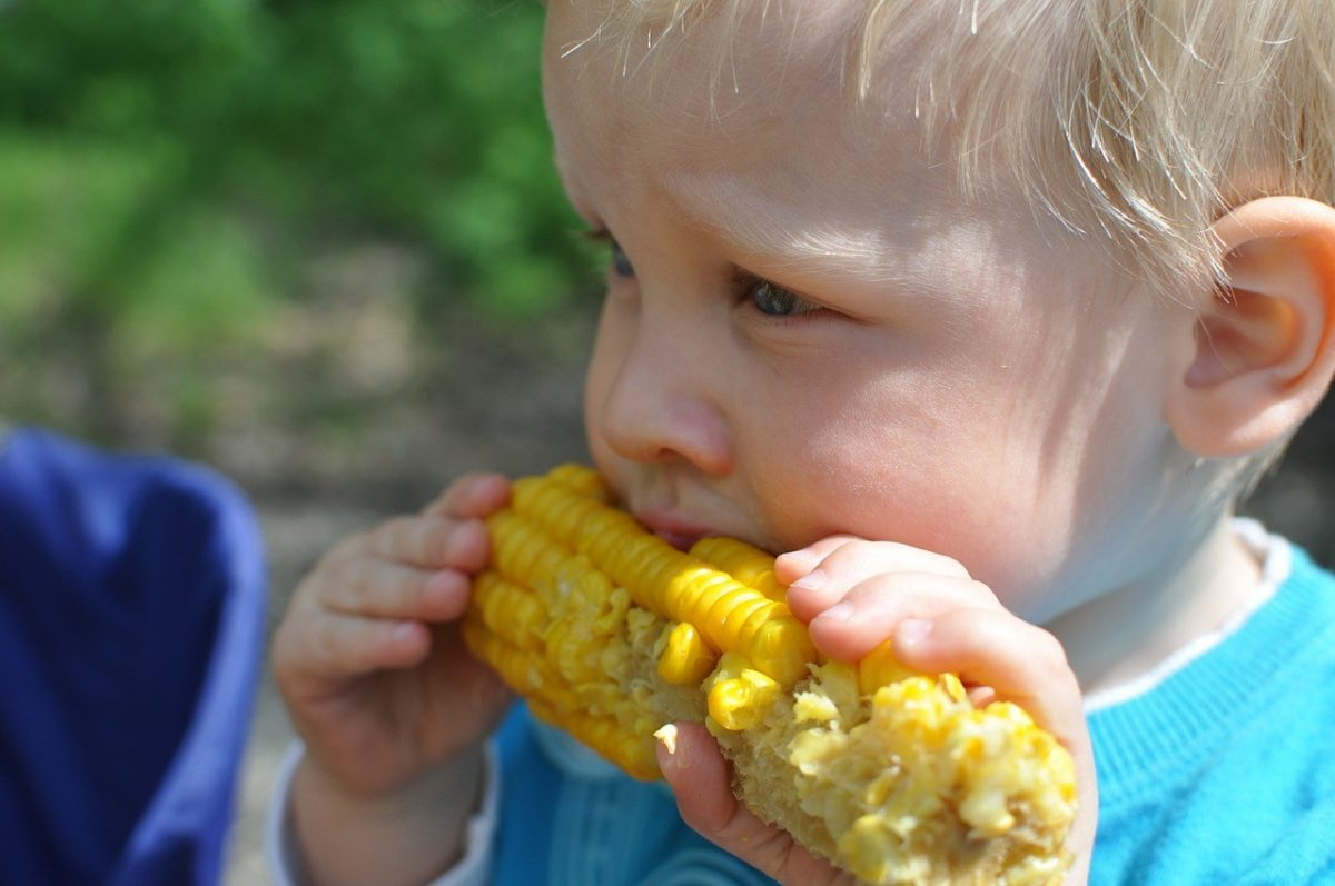 A young boy with blonde hair eating corn on the cob.
