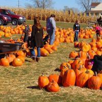 children playing at a pumpkin patch