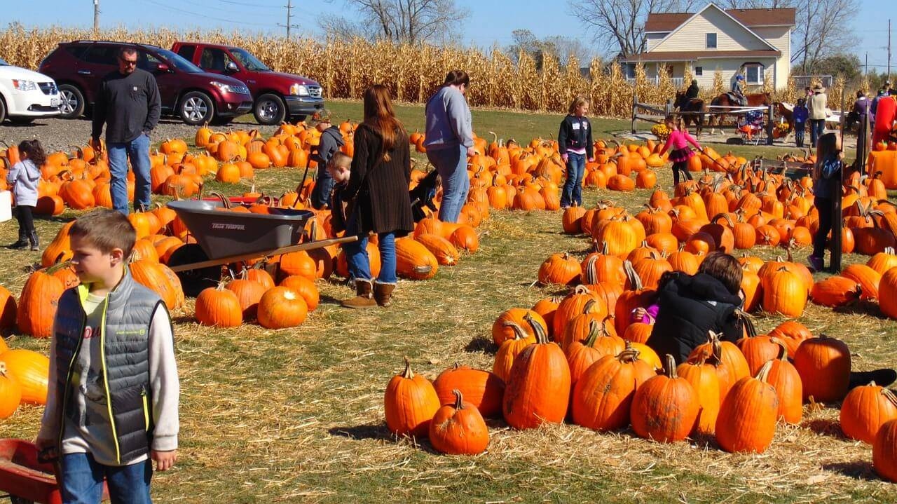 children playing at a pumpkin patch