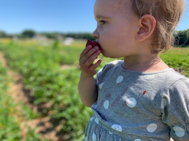 Toddler peacefully eating a strawberry